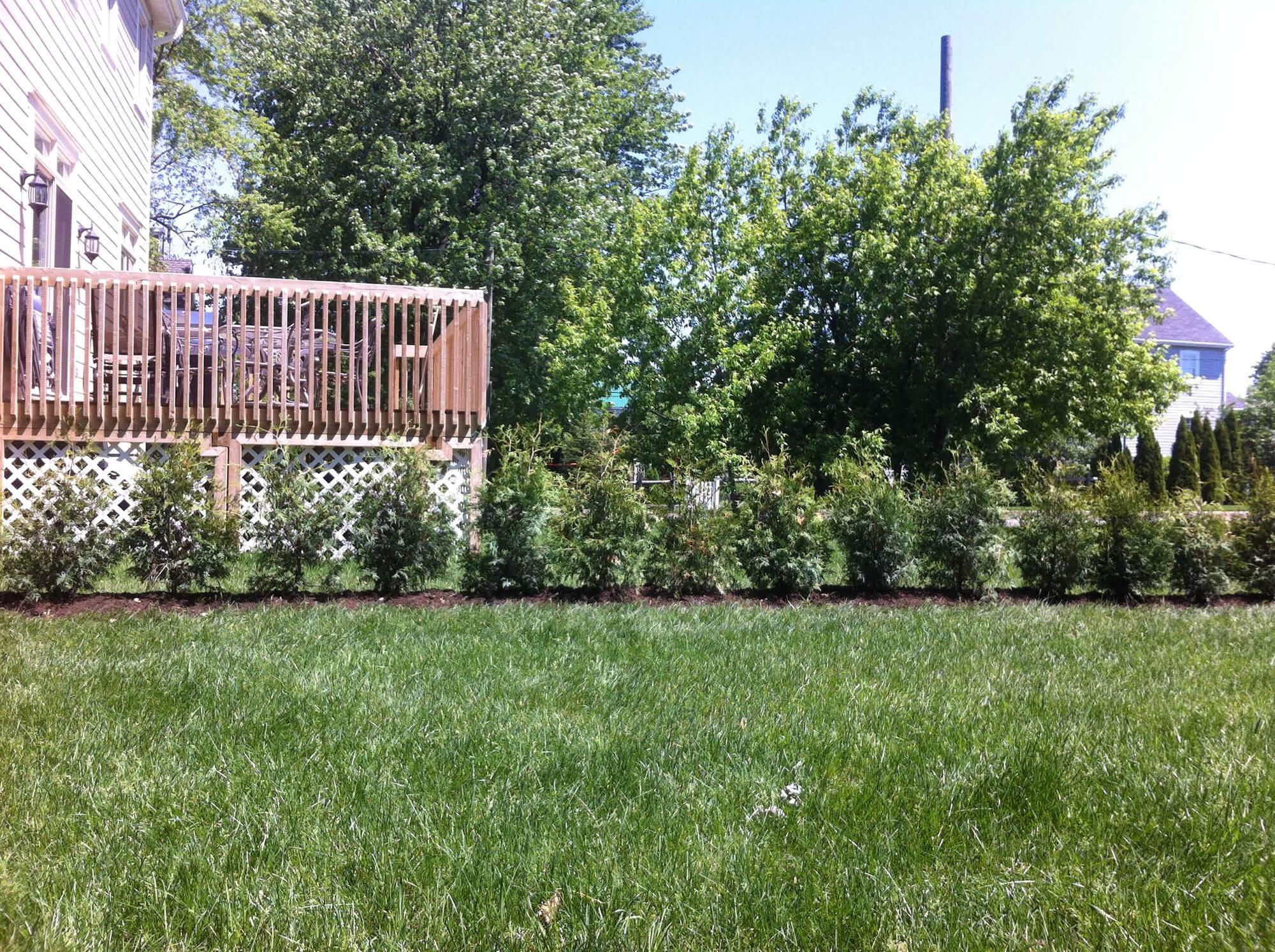 3.1-plantation-3-4-27-05-2013-2