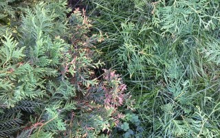 dommage herbicide